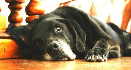 الإسهال عند الكلاب
