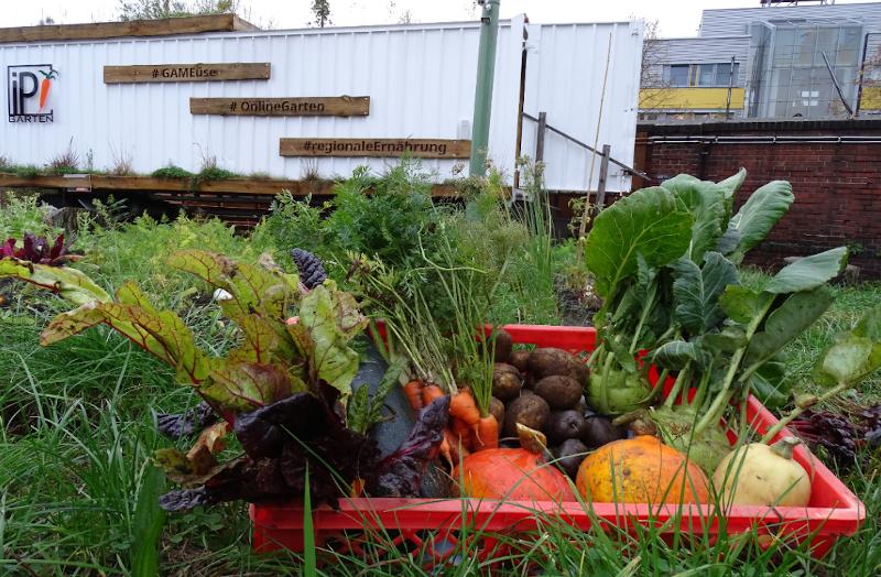 Das IPGarten-Projekt: Regionales, soziales und klimaschonendes Gemüse ohne synthetische Dünger, Pestizide und Plastikverpackungen.