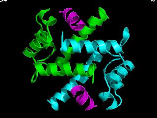 P11 Mood Regulating Protein