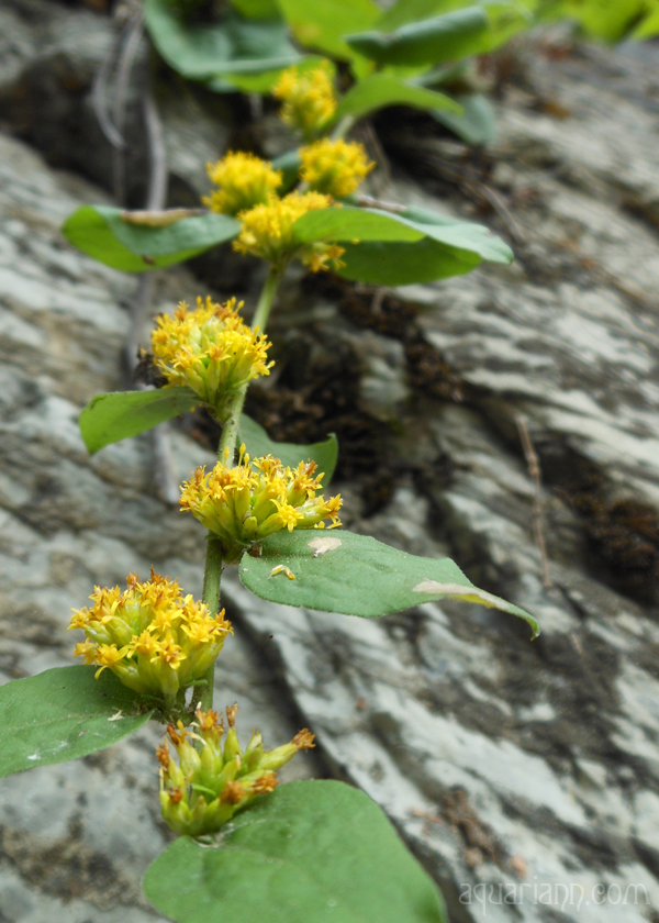 Yellow Wildflower Photo by Aquariann