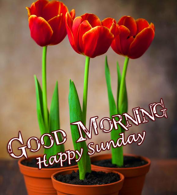 Sunday good morning wish