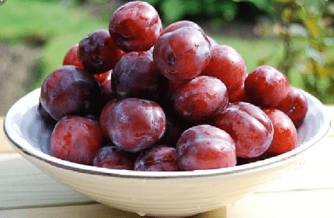 manfaat buath plum