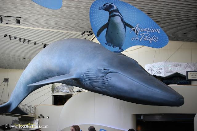 @aquariumpacific
