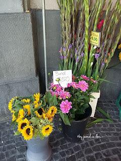 florile lunii august floarea soarelui dalii gladiole