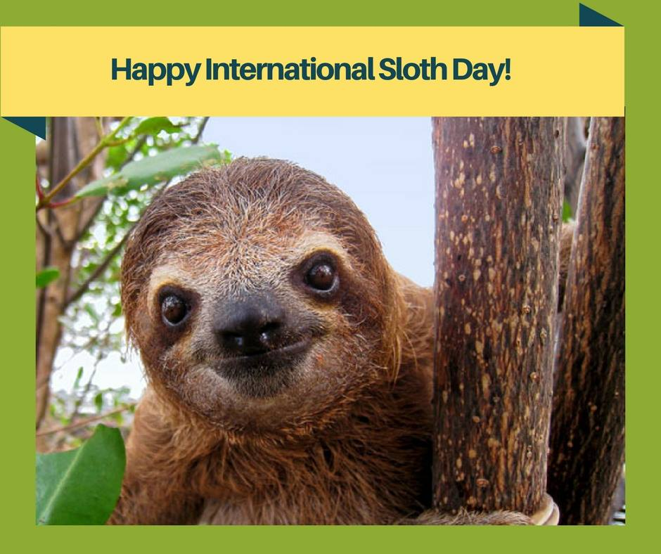 International Sloth Day Wishes for Whatsapp