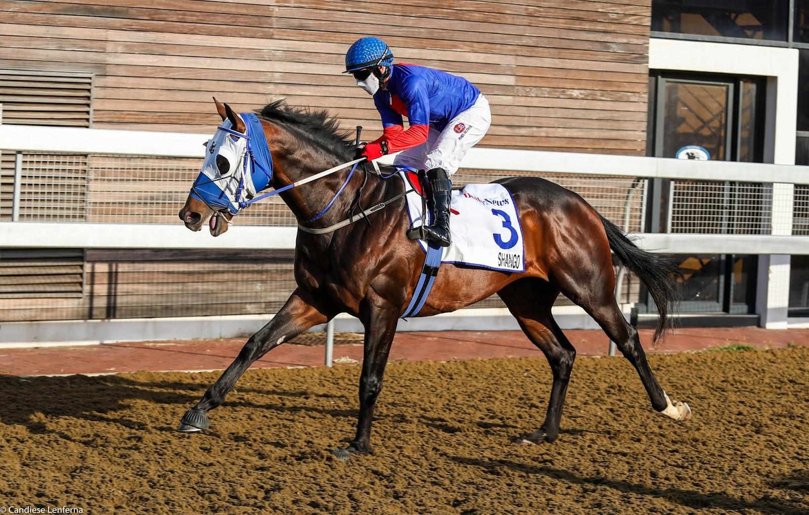 Vodacom Durban July 2020 Horse Profile - Shango