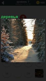 В лесу тропинка зимой и вдоль нее расположены высокие деревья