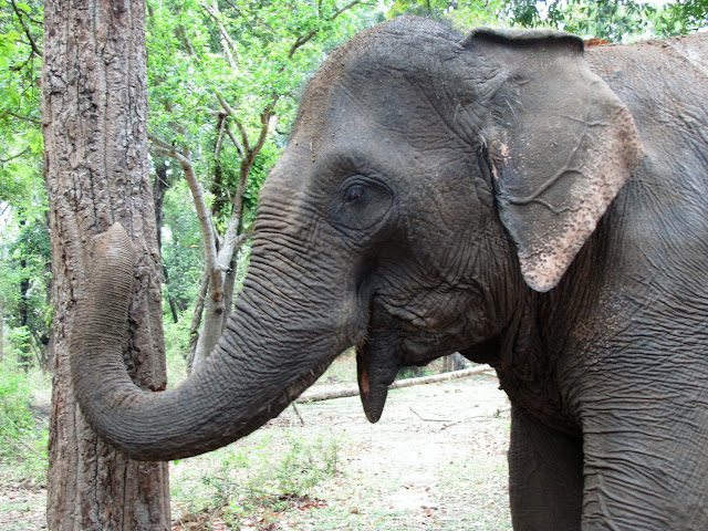 elephant yok don national park vietnam