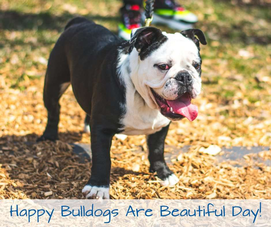 National Bulldogs Are Beautiful Day Wishes for Instagram