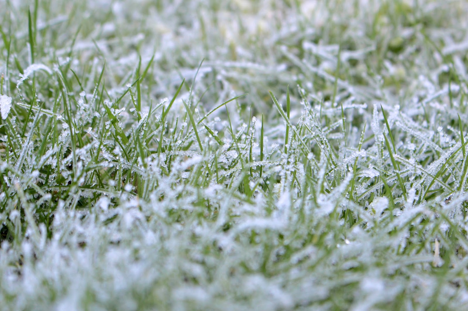 frosty ground close up
