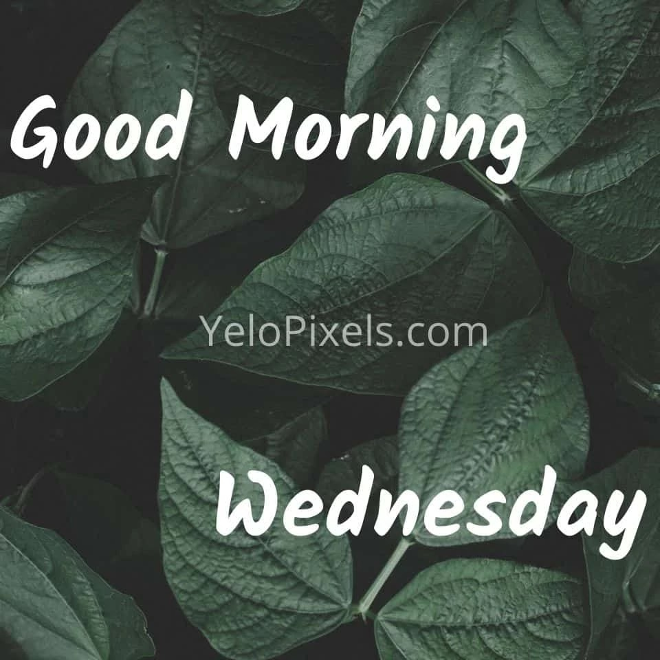 Morning-leave-That-gives-fresh-air-at-morning-wednesday