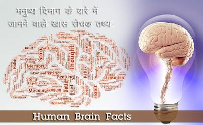 मानव मस्तिष्क संरचना, About Human Brain in Hindi, brain ke bare mein jankari,  mastishk sanrachna, manav dimag ki sanrachna, मानव मस्तिष्क तथ्य
