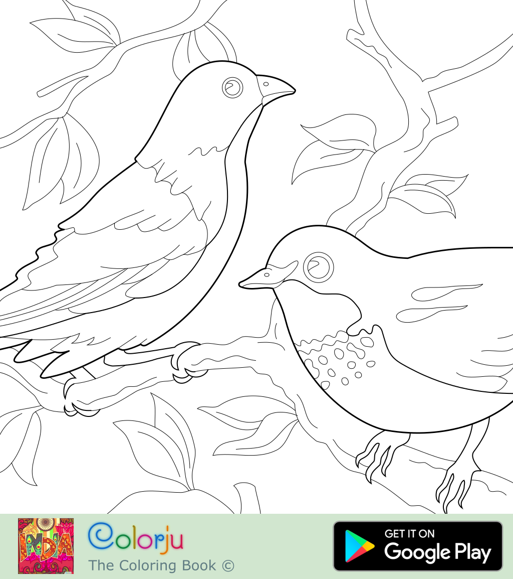 - Coloring Pages D: Animal Coloring Pages 1