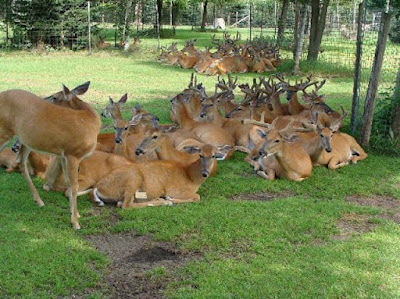 Malsi Deer Park in Dehradun City