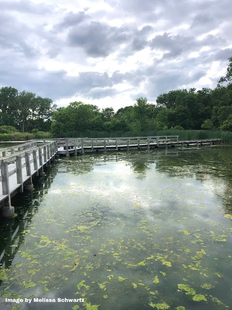 Heron Haven's boardwalk provides an incredible exploration of an oxbow wetland.