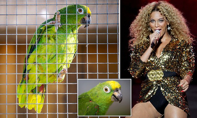 """Watch As Parrot Performs Beyonce's """"If I Were A Boy"""""""