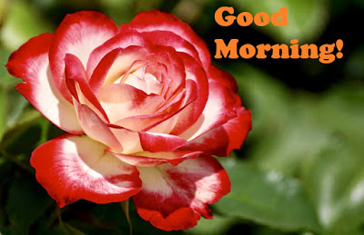 Good Morning Flowers Images HD