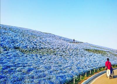 Keindahan  Alam Ibaraki Jepang