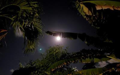 full moom behind banana tree leaves