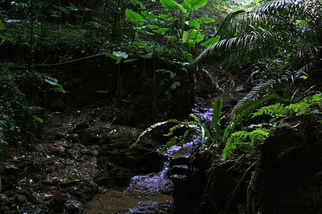 シムクガマの小川の写真