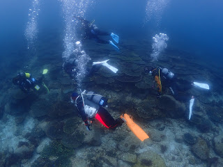 2021年5月1日の柏島ダイビング