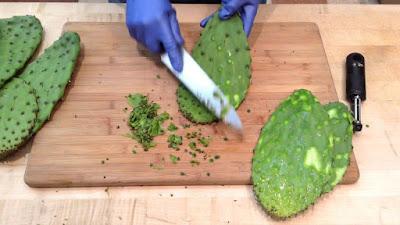 Nopal kaktus yang bisa dimakan