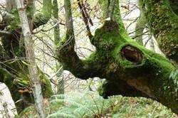 https://emanants.blogspot.com/2020/02/les-arbres-magiques-page-3.html