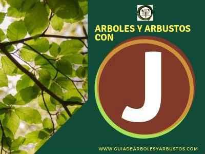 Lista de arboles y arbustos que empiezan con la letra J