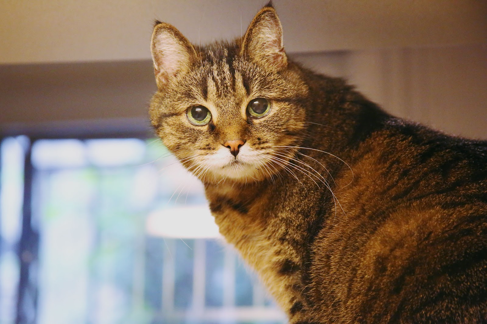 Insights Into Veterinary Endocrinology