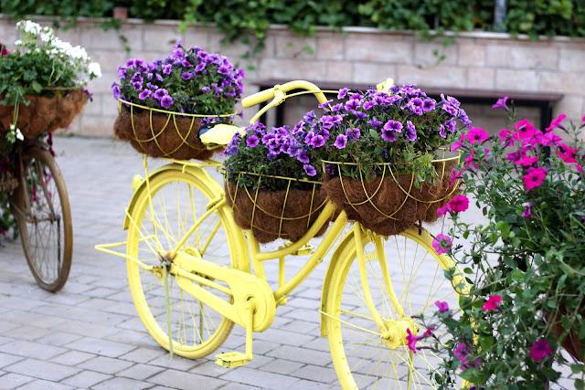 Dubai Miracle Flowers Garden