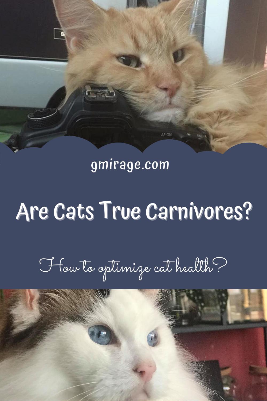 Are Cats true carnivores?