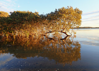sunlight in mangroves