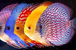 Ini Alasan Komplit Kenapa Ikan Bau Amis, Baca Hingga Tuntas!