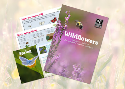 Wildflower guide from Cheshire Wildlife Trust