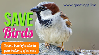 Image about give water to help birds in summer