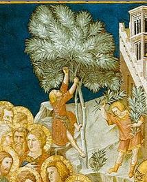 Resultado de imagem para palmeira palma cristo