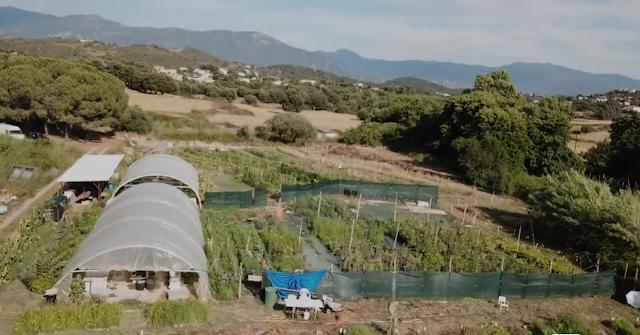 Autonomie alimentaire des territoires : un exemple corse
