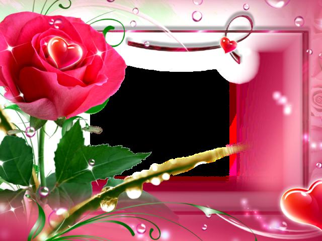 beautiful red rose wallpaper free download