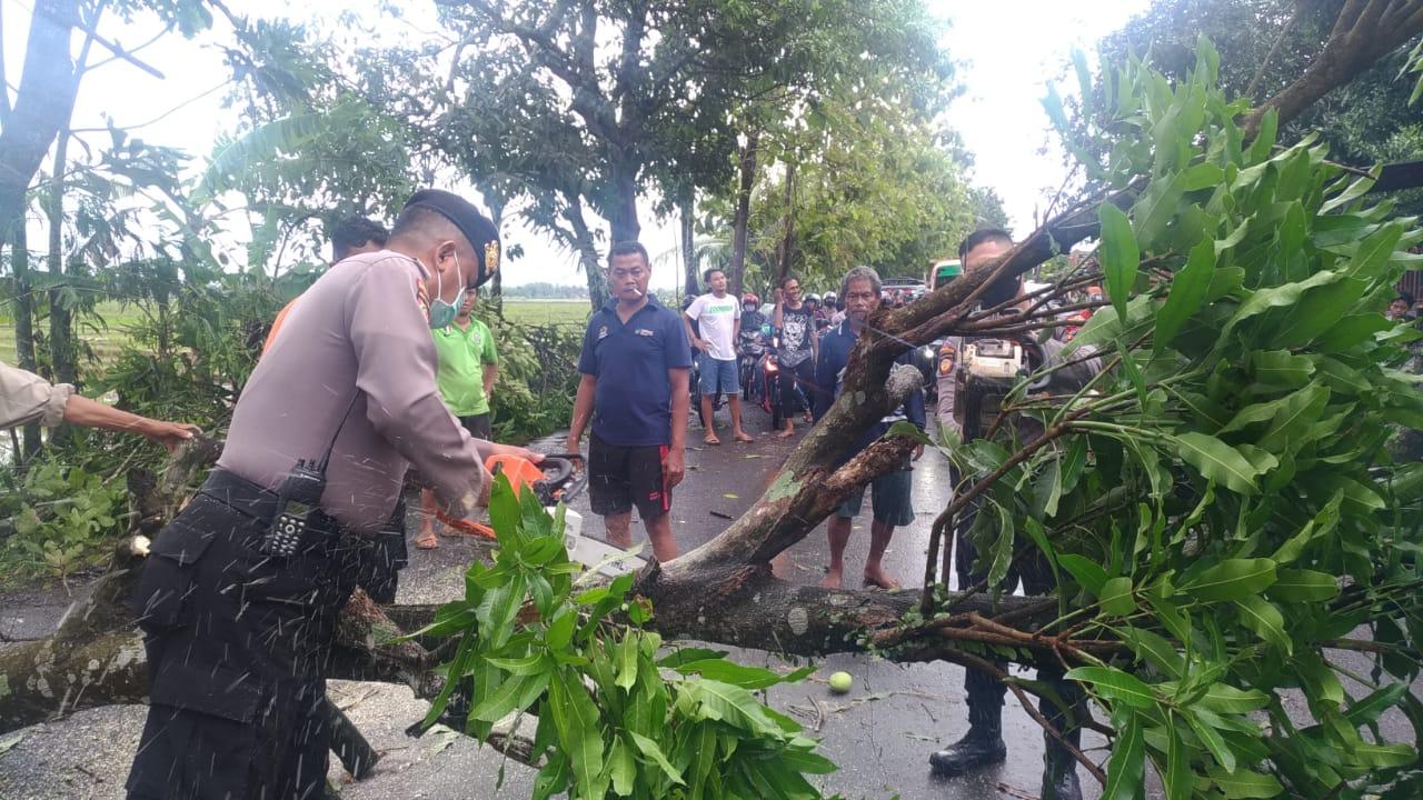 Polres Purbalingga Terjunkan Personel Bantu Evakuasi Pohon Tumbang di Kemangkon