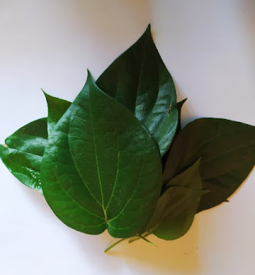 Manfaat dan hasiat daun sirih