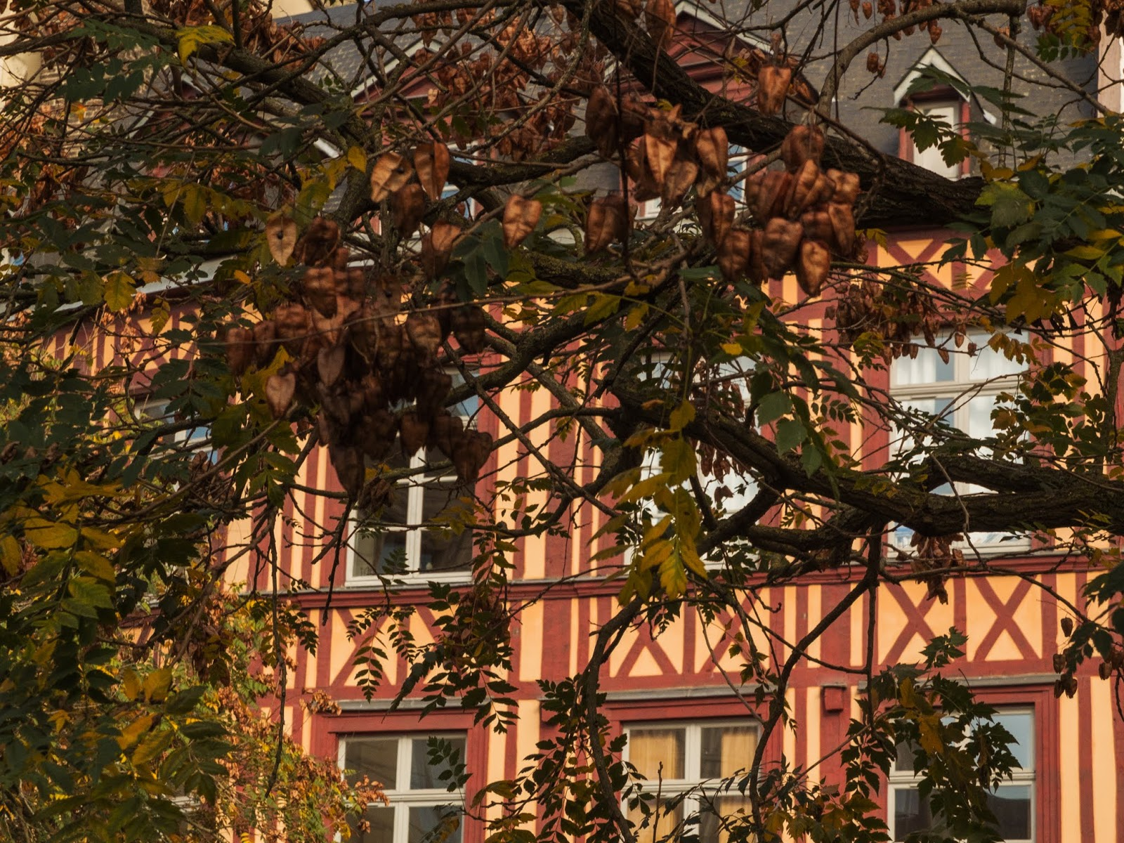 A view of a building through tree branches in Rouen, France.