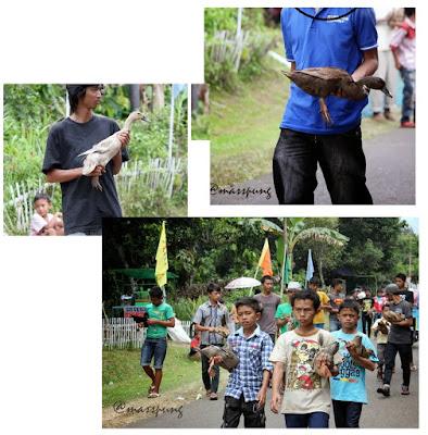 Pacu Itik (Duck-Race) di Payakumbuh