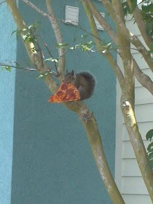 Lustiges Eichhörnchen klaut Pizza