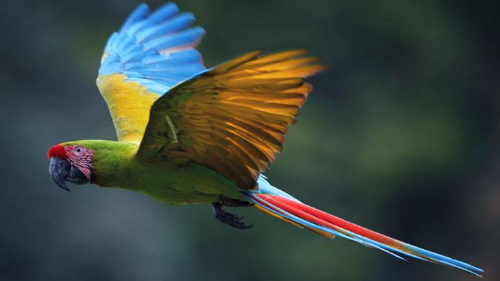 parrot training