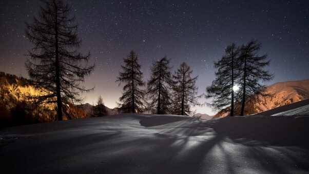 Desktop HD Wallpaper Winter Trees Snow Night Landscape