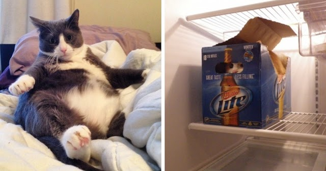 10+ Discoveries You Make When You Get A Cat