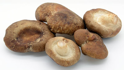 Mushroom Supplier Company in Udaipur