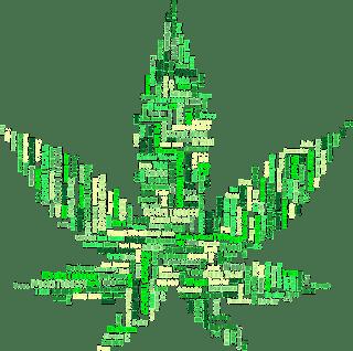marijuana, drugs, cannabis, hemp, leaf, plant, pot, weed
