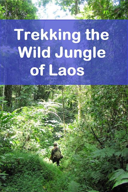 souvit guide jungle nam et phou louey national protected area laos