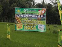 Natural Bvr Adalah.Jamur Entomopatogenik Beuaveria bassiana.Natural BVR Untuk Mengendalikan Wereng,Walang Sangit,Penggerek Batang Padi,Penggerek Buah Kopi dan Kakao